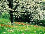 Albero e prato fiorito