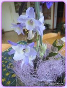 germogli_orchidea_blù - Acquario azzurro©