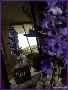 Orchidea Dendrobium nobile - Acquario azzurro©