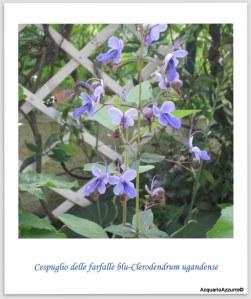 Clerodendrum ugandense/AcquarioAzzurro©